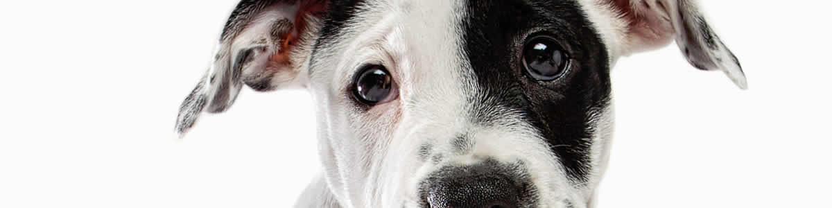 puppy white bg