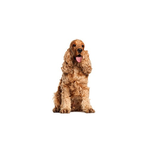 Dog Breeds Information Columbus, Ohio - Petland Carriage Place