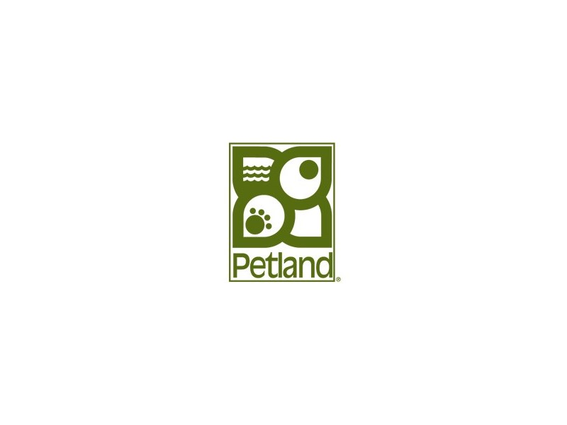 Coton De Tulear-Female-White-1796471-Petland Carriage Place