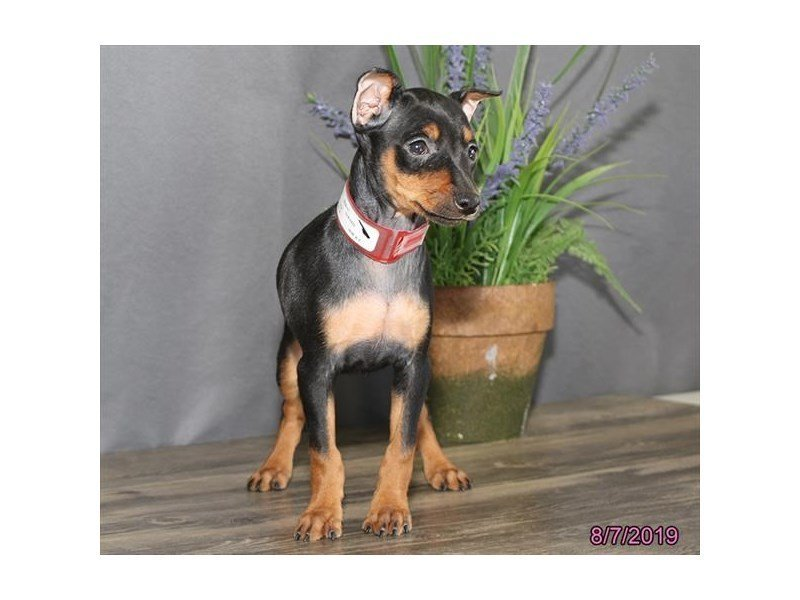 Puppy Photo Gallery - Peltand Carriage Place in Columbus, Ohio